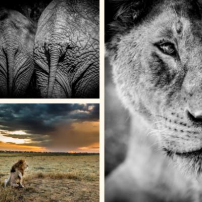 Photographer-of-the-year-wildlife-2019