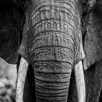 photo-art-deco-elephant