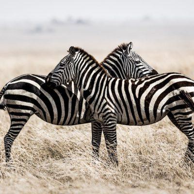 photographe-grenoble-photo-animaux